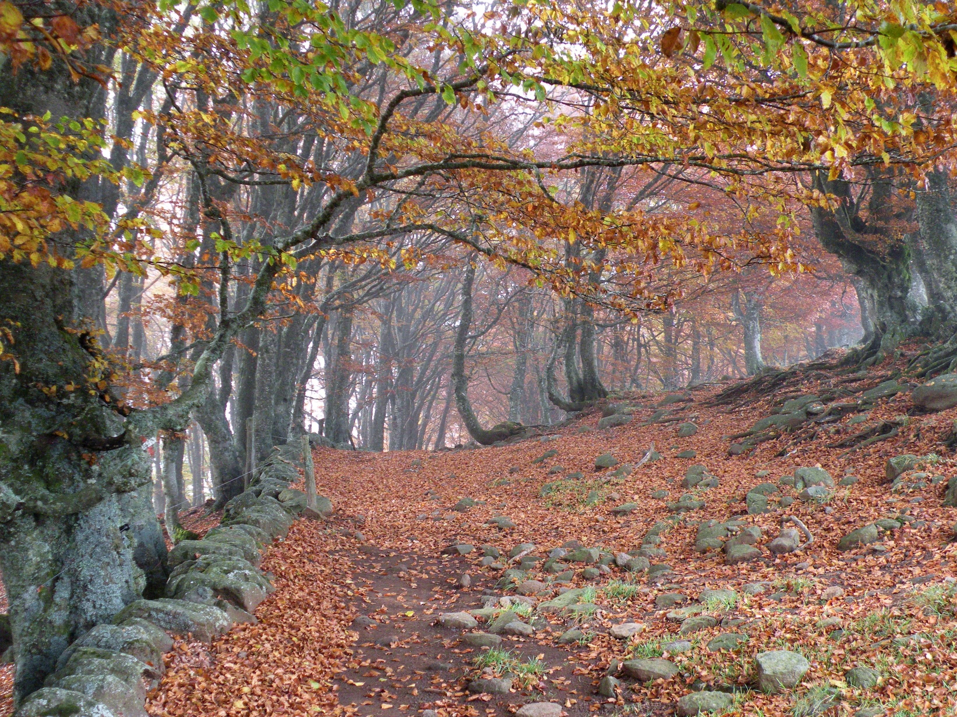 GR65 0503 Plateau Aubrac Sentier